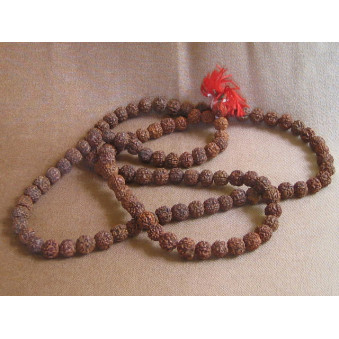 Prayer beads Rudrakhasha fruit