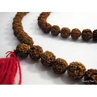Prayer beads Mala from Rudrakhasha fruit